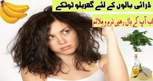 Amazing Home Remedies to Get Rid of Dry Hair Naturally